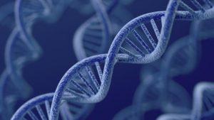 Đồng tính do gen quy định