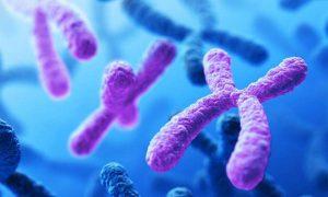 Các bệnh nhiễm sắc thể phổ biến